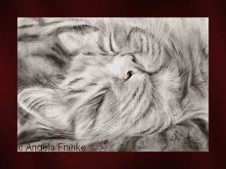 drawing charcoal Ginger cat Katze Zeichnung Portrait Bild kitten chat