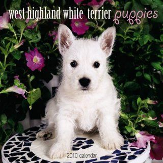 West Highland White Terrier Puppies 2010 Calendar